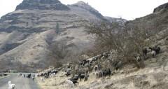 Magden Flock on a Hill 2003