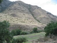 Magden Flock 2004 Specks on a Mountain