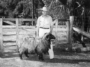 Bill Davis & full grown Karakul ram