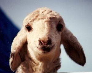 DeVlieg 92 lamb Ghost