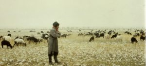 cropped-1987-uzbek-shepherd-w-sheep3.jpg